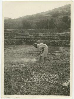 Fotografie bei bettir. Hacken im Gemüsefeld zum Zwiebelpflanzen oder nach dem Zwiebelausreißen