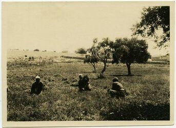 Fotografie [Ernte unterhalb vom Aussätzigenasyl, Jerusalem]