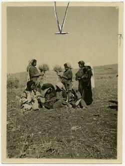 Fotografie [Ährenleserinnen und Kinder auf abgeerntetem Feld südlich Jerusalem]