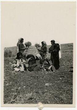 Fotografie a group of Cleaners [Ährenleserinnen und Kinder auf abgeerntetem Feld südlich Jerusalem]