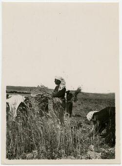 Fotografie Plains of Rahaim [Refaim, Ernteszene]
