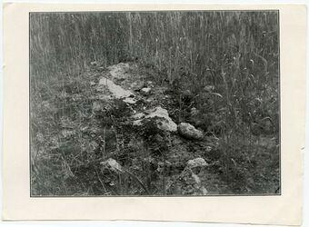 Fotografie [Weizen auf felsigem Boden (el-Bak