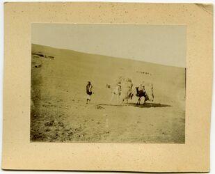 Fotografie Kamele mit Getreide. Elkerak [Al-Karak]