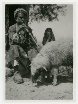 Fotografie bei sarafat [Hirtenknabe, flötend auf Bordunschalmei, vor ihm Fettschwanzschaf]