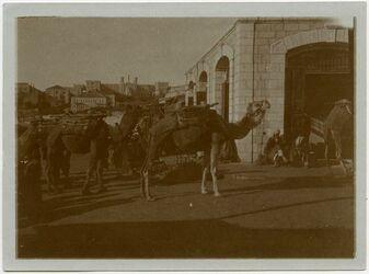 Fotografie Vor d. Damaskustor. Blick auf N. D. der Frauen [Jerusalem]