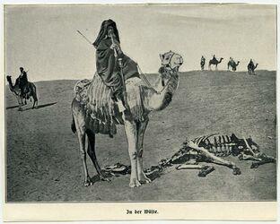 Fotografie In der Wüste. [Kamele]