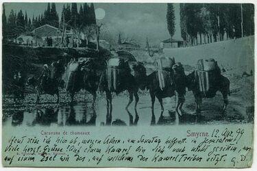 Fotografie Caravane de chameaux. Smyrne. [Postkarte von Gustaf Dalman]