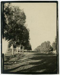 Fotografie Wilhelma [Bäume, Bnei Atarot]
