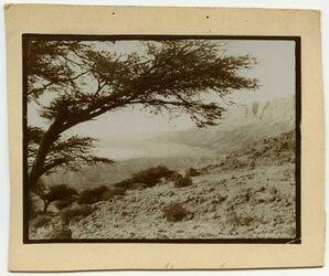Fotografie v. Engedi südwärts [Bäume, en gedi]