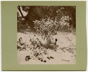Fotografie Zweige v. Dardar in d. Gärten v. Aleppo [Bäume]
