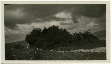 Fotografie sindjan z daris, kekab bei el-ikebe (Kefire?) [Bäume]