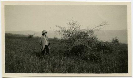 Fotografie Side-buske i wilfaer vara Kapernaum. [Bäume, kafarnaum]