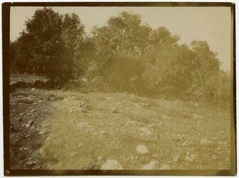Fotografie Hain am Fuß von Kefire, kekab [Bäume]