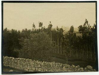 Fotografie gerasch [gerasa] Gärten v. NO [Bäume]
