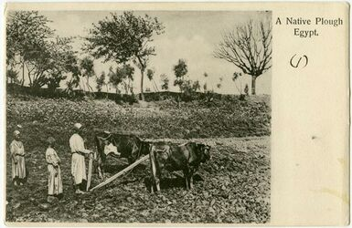 Fotografie A Native Plough Egypt [Pflügen]