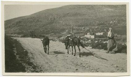 Fotografie [Nordpalästinischer Pflug auf dem Wege zum Felde (bei nablus, im Hintergrund Ebal), Pflügen]