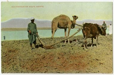 Fotografie Cultivateur en Haute Egypte. [Pflügen]