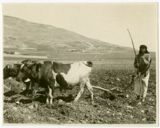 Fotografie el-achna, im Hintergrund Ebal mit