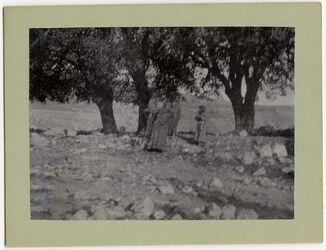 Fotografie Tanzendes Zigeunermädchen unter d. heiligen Bäumen bei Balat
