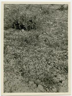 Fotografie Heuschrecken fressend