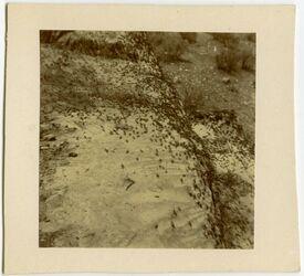 Fotografie Heuschrecken Petra