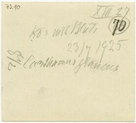 GDIp02786; Fotografie; Kor [?] mit Blüte Canthamus glaucus [?], in Bestand von rund 5.000 nach Themen und Orten sortierten Kleinbildabzügen