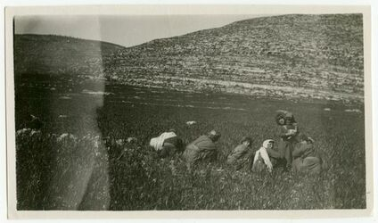 Fotografie Rausring of ogas vor Han al-Lubban. [???, wohl el-lubban]
