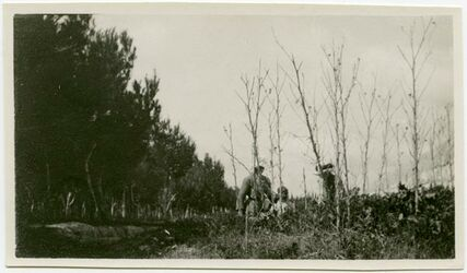 GDIp02805; Fotografie; [Pflanzenfoto, Nazareth], in Bestand von rund 5.000 nach Themen und Orten sortierten Kleinbildabzügen
