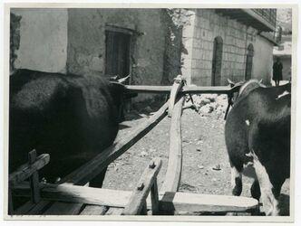 Fotografie [Tscherkessische Wagendeichsel mit Joch (in