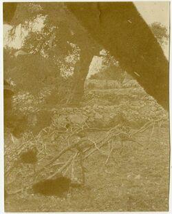 Fotografie [Weinberg, Hebron]
