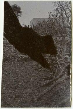 Fotografie Weinberg [Hebron]