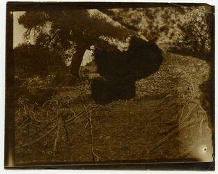 Fotografie Hebron [Weinberg]