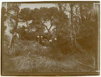 Fotografie Mittagsrast im Wald bei beth-mahsir