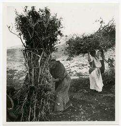 Fotografie birzet [Holz tragende Frauen]