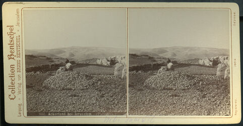 Stereofotografie Ackerland bei Jerusalem. (Palästina.) [Ackerland bei Jerusalem, Nebi samwil]