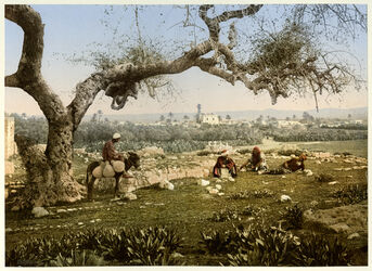 Photochrom Lydda.