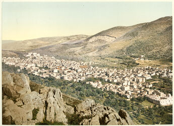 Photochrom Naplouse. La Vallée de Naplouse Sichem. [Nablus, Tal]