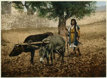Photochrom Paysan de Palestine. [Bauer aus Palästina]