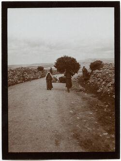 Fotografie Frauen mit Reisig a. d. Ölbergstr. [Jerusalem]