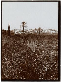 Fotografie Blick v. Hotel du Parc n. Jaffa [Deutsche Kolonie]