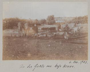 Fotoalbum An der Quelle von kefr kenna. 4. Nov. 1903.
