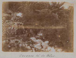 Fotoalbum Bananen bei der Mühle [im wadi kelt].