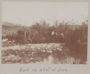 Fotoalbum Bach im wadi el-hesa.