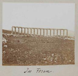 Fotoalbum Im Forum. [Gerasa]