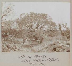 Fotoalbum weli in banias [banyas (Ort)]. Sultan ibrahim el