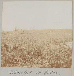 Fotoalbum Bohnenfeld bei kadas.