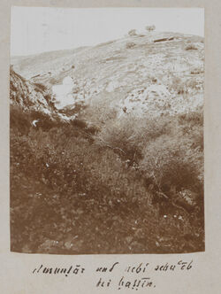 Fotoalbum el muntar und nebi schu