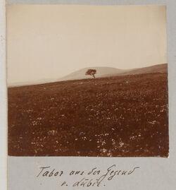 Fotoalbum Tabor aus der Gegend v. Lubie.