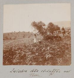 Fotoalbum Zwischen chan et-tuggaz [et-tudschdschaz, et-tudjdjaz] und Tabor.