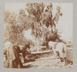 Fotoalbum [Im Garten am Jakobsbrunnen [Garizim]. Zickermann.]
